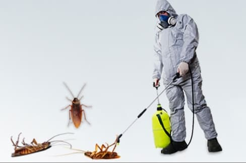 مكافحة حشرات المطلاع