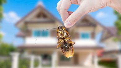Photo of مكافحة حشرات النهضة