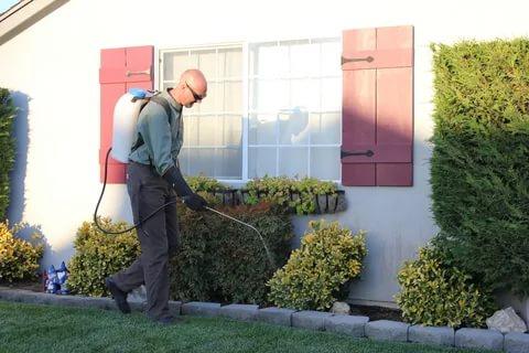 مكافحة حشرات الصليبخات