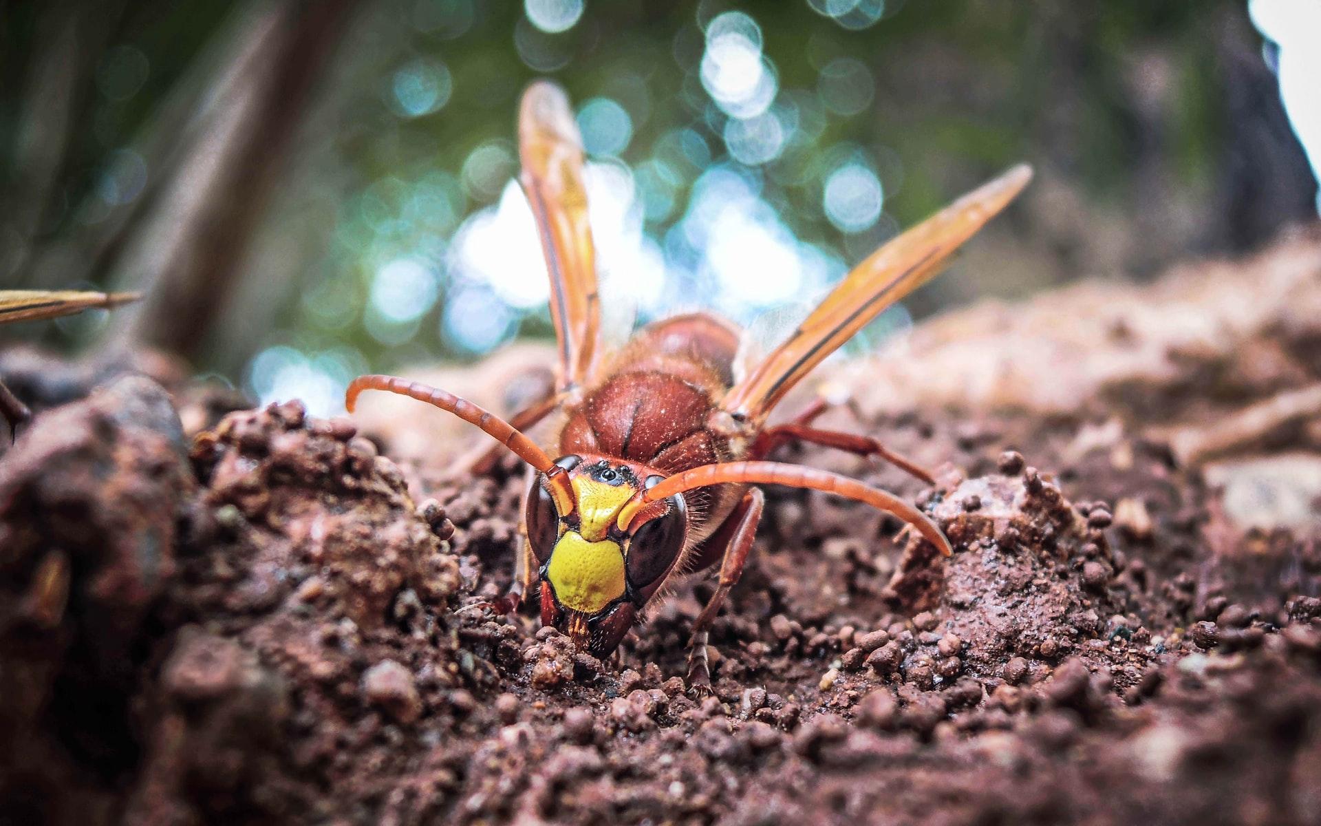 شركة مكافحة ابو فطيرة للحشرات والقوارض
