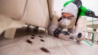 Photo of شركة مكافحة حشرات الفيروانية