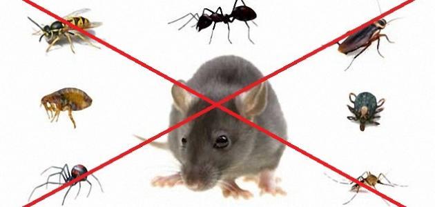 شركة مكافحة حشرات المسايل