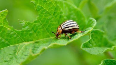 Photo of شركة مكافحة حشرات حطين