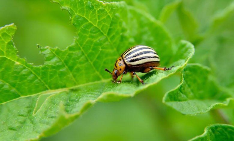 شركة مكافحة حشرات حطين