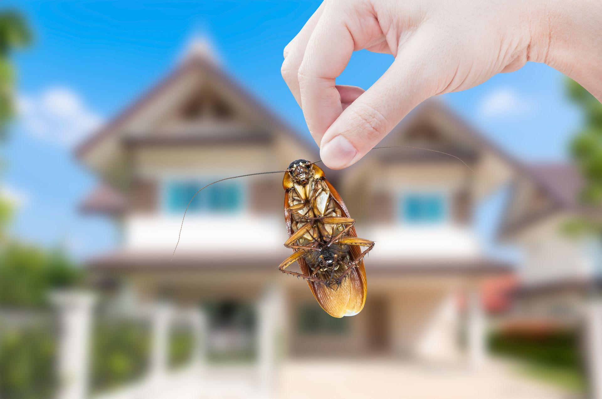 شركة مكافحة حشرات العدان