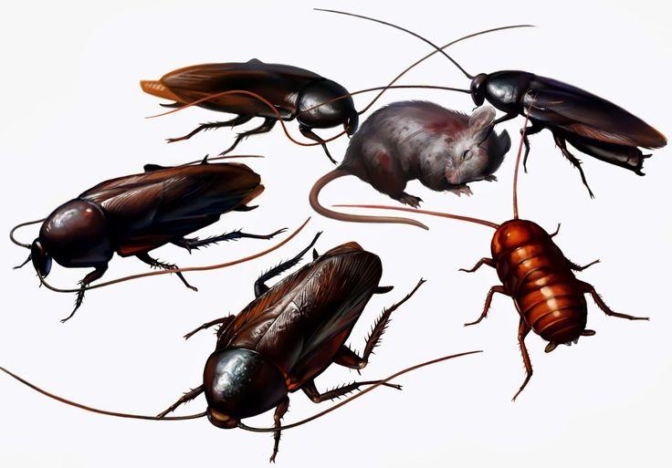 شركة مكافحة حشرات مدينة الخيران