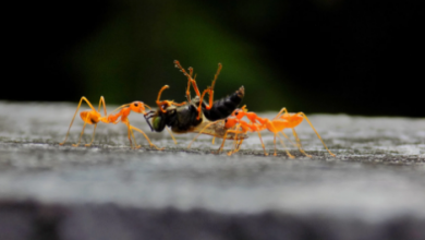 Photo of شركة مكافحة حشرات الضجيج