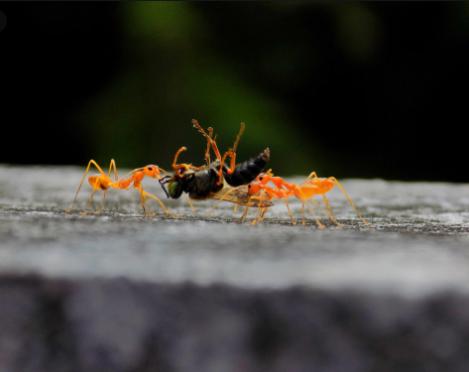 شركة مكافحة حشرات الضجيج