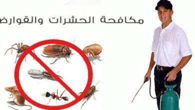 Photo of شركة مكافحة حشرات جنوب السرة